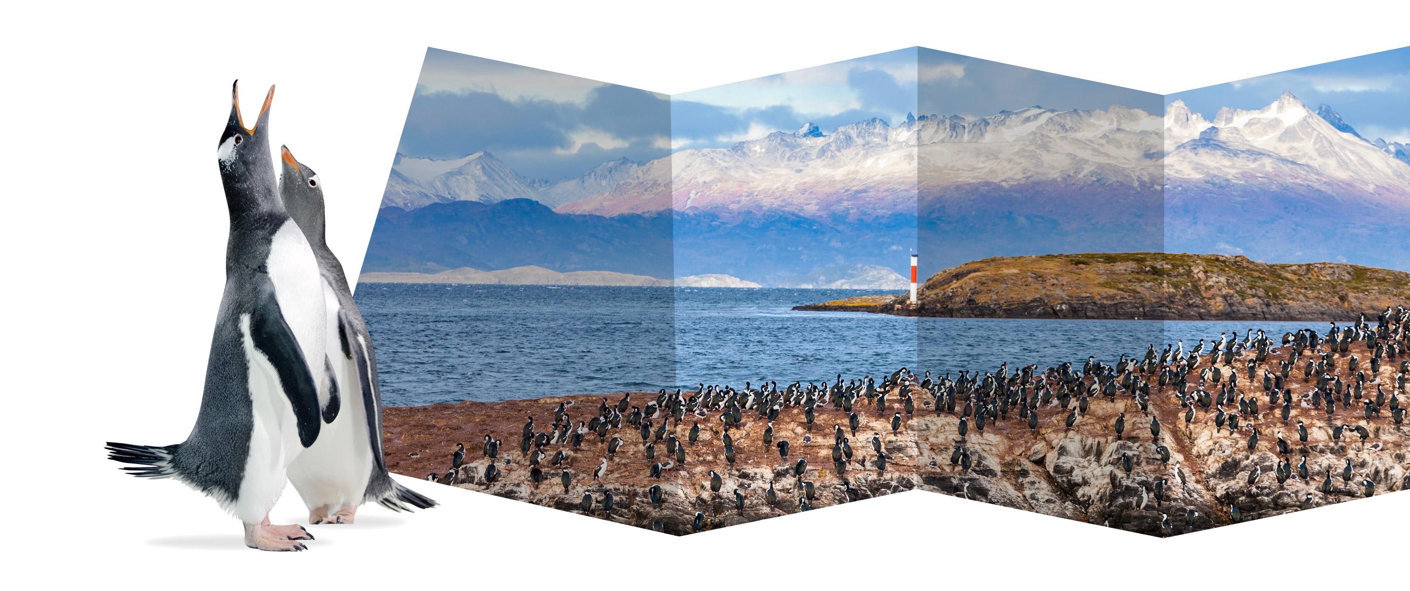Wildtiere Blog Chile und Südamerika