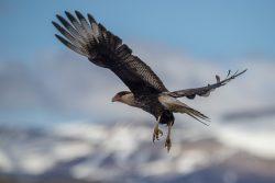 ein vogel fliegt