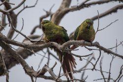 Papageien am Baum