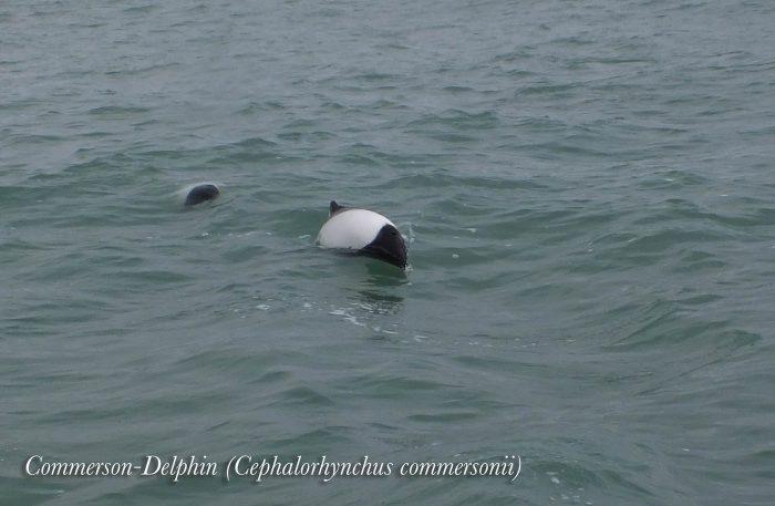 Delfine springen aus dem Wasser