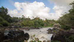 atlantischer Küstenregenwald