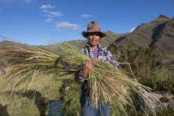 Heuernte in der Cordillera Blanca