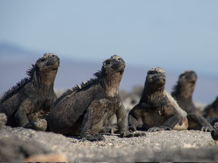 Meeresechesen in einer Gruppe