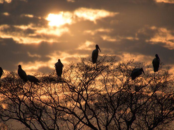 Sonnenuntergang am Rio Claro