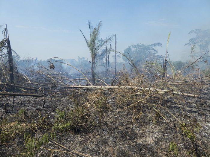 ein abgebrannter Wald im Amazonas