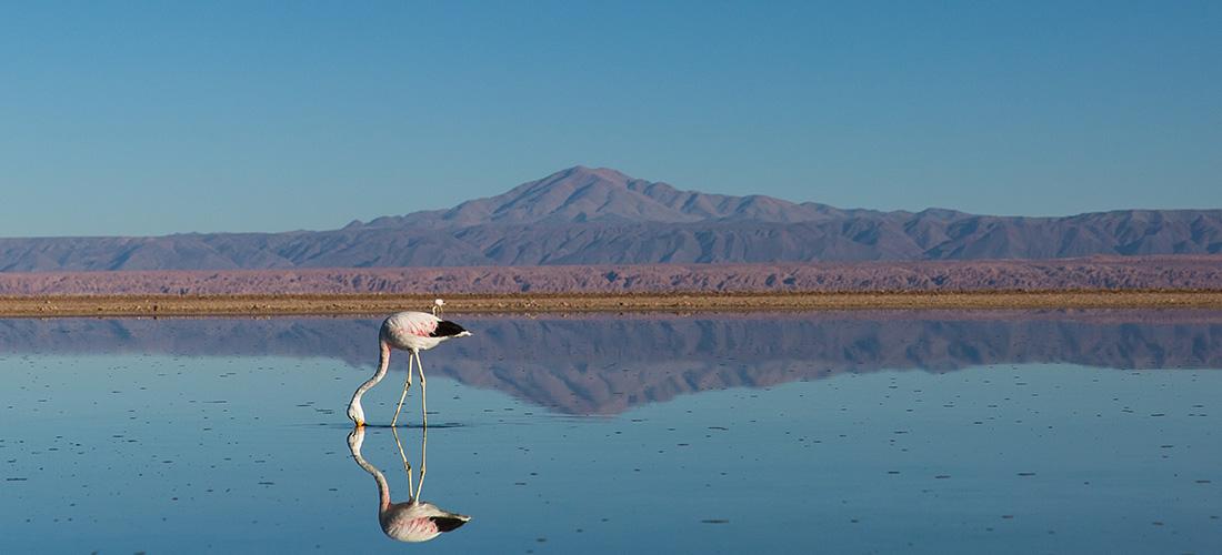 Flamingo in den Anden, Salar, San Pedro de Atacama