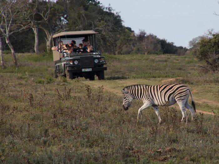 unterwegs mit dem Safariauto