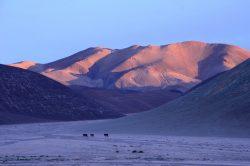 Camper im altiplano
