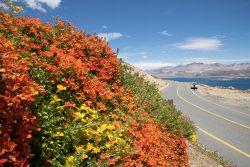 Kupferblumen Chile