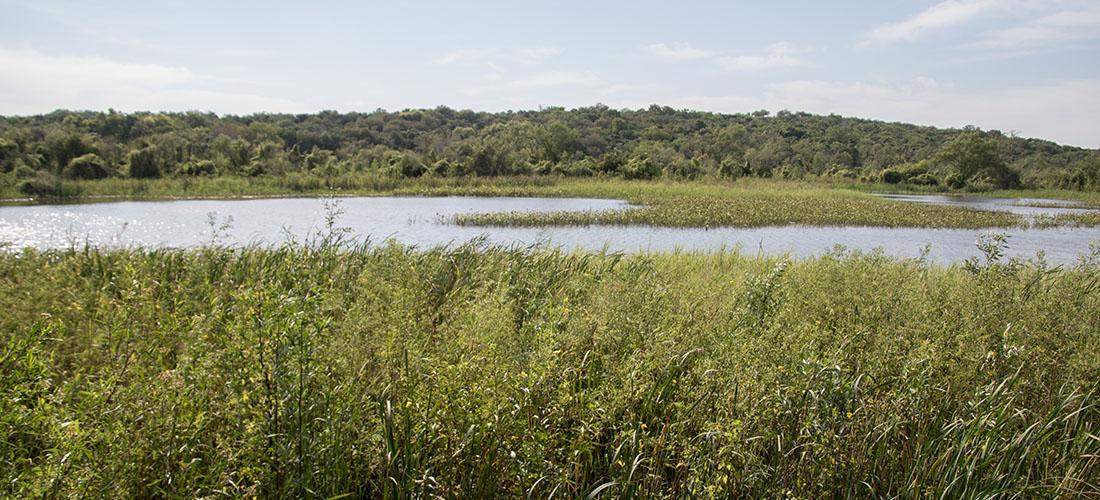 Nationalpark Pre Delta