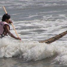 Caballito del mar