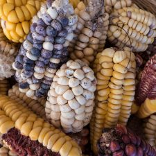 Mais aus Peru