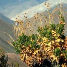 Flowers in the Chilean Altiplano