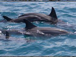 delfines en el agua