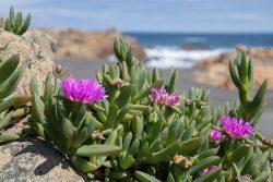plantas en la costa