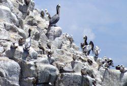 aves de la región del maule