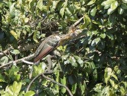 un ave en el arbol
