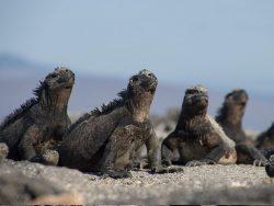 animales de Galápagos