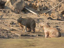 animales en la orilla del rio