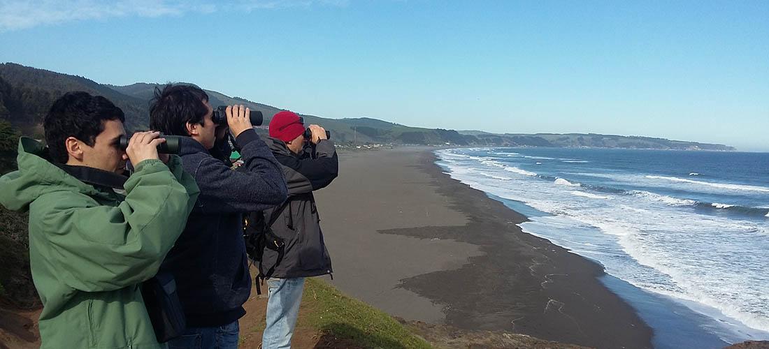 gente observando aves en la costa de l Maule