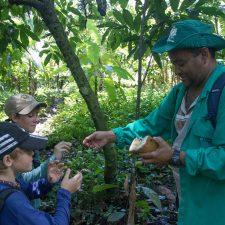 probando la fruta de cacao