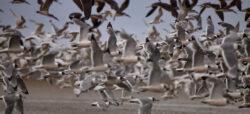 Bird watching - Maule