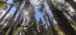 Bosques nativos de Chile